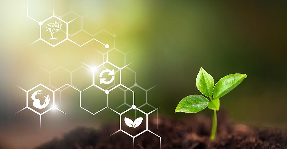 Groupe Y Nexia et développement durable